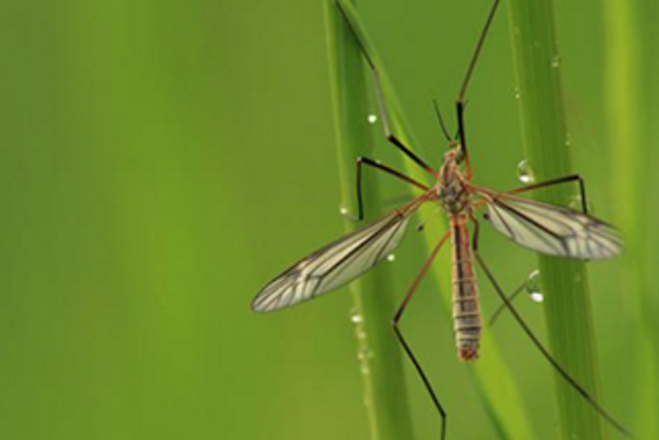 Lawn Insects - GoldenRule Lawn Solutions